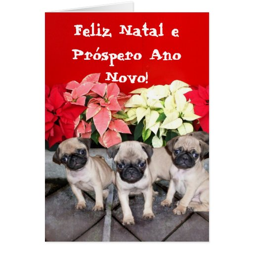 Christmas pug puppies cards