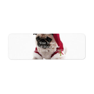 Christmas pug - santa claus dog - dog claus
