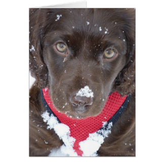 Christmas Puppy Snow Card