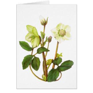 Christmas Rose Card