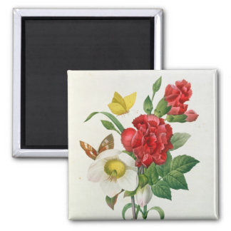 Christmas Rose, Helleborus niger Square Magnet