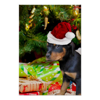 Christmas Rottweiler puppy Poster