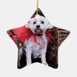 Christmas - Schnoodle - Zoey Ceramic Star Ornament
