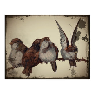 Christmas Sparrows Postcard
