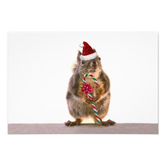 Christmas Squirrel with Candy Cane Photograph