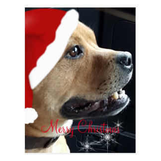 Christmas Staffordshire Bull Terrier Postcard