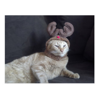 Christmas Tabby Reindeer Postcard