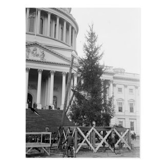 Christmas Tree at the Capital Postcard