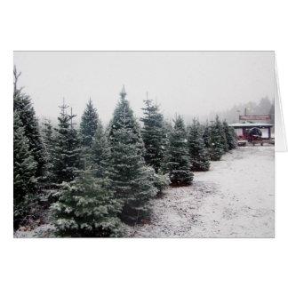 Christmas Trees Card