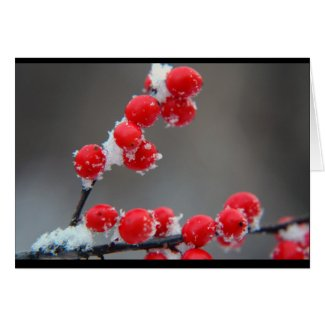 Christmas Winter Berries Card