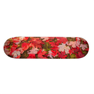 chromatic magic of the autumn  Skateboards