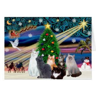 Chrstmas Magic - Six cats (variety) Card