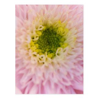 chryanthemum in the garden postcard