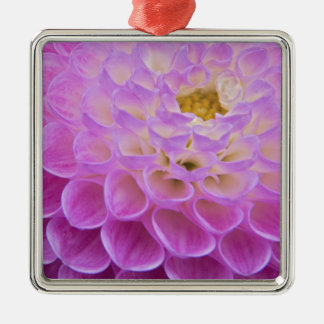 Chrysanthemum flower decorating grave site in Silver-Colored square ornament