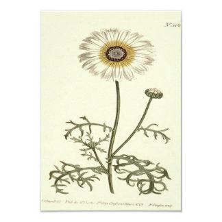 Chrysanthemum Tricolor Yellow Illustration Card