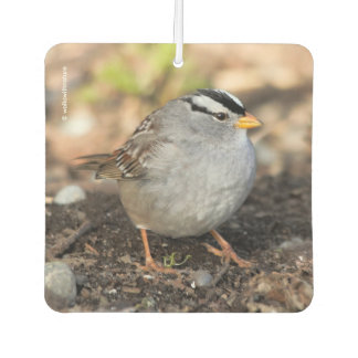 Chubby White-Crowned Sparrow in the Winter Sun Air Freshener