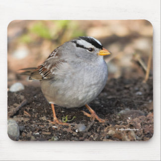 Chubby White-Crowned Sparrow in the Winter Sun Mouse Pad