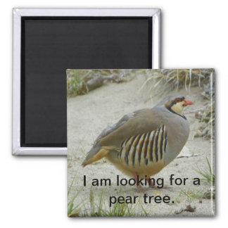 Chukar Partridge game bird hunting sport Magnet