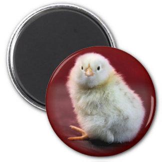 Chunky Chicky Magnet