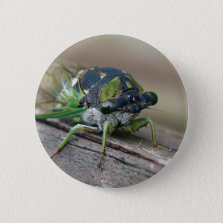 Cicada 2 Inch Round Button