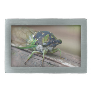 Cicada Belt Buckles