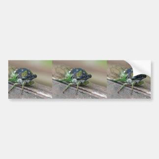Cicada Bumper Sticker