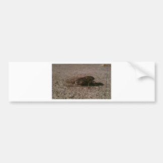 Cicada Bumper Sticker