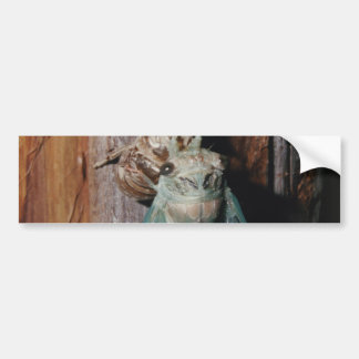 Cicada dries his wings bumper sticker