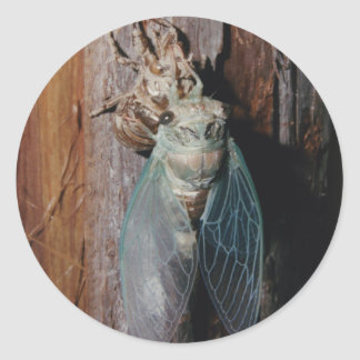 Cicada dries his wings classic round sticker