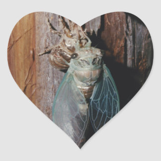 Cicada dries his wings heart sticker