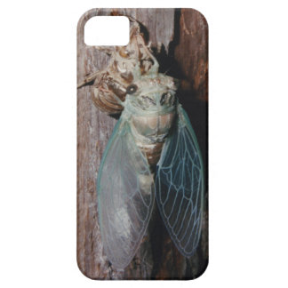 Cicada dries his wings iPhone 5 covers