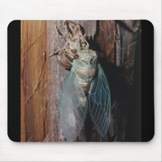 Cicada dries his wings mouse pad