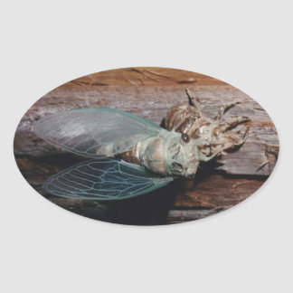 Cicada dries his wings oval sticker