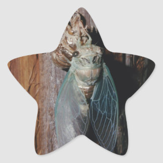 Cicada dries his wings star sticker