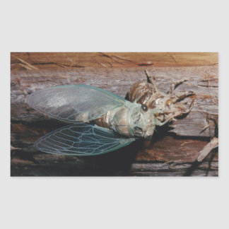 Cicada dries his wings sticker