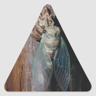 Cicada dries his wings triangle sticker
