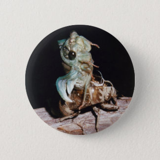 Cicada Emerging from Shell 2 Inch Round Button
