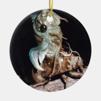 Cicada Emerging from Shell Ceramic Ornament