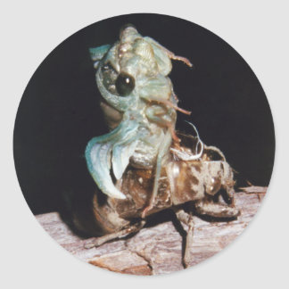 Cicada Emerging from Shell Classic Round Sticker