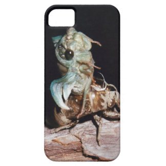 Cicada Emerging from Shell iPhone 5 Cover