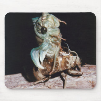 Cicada Emerging from Shell Mouse Pad