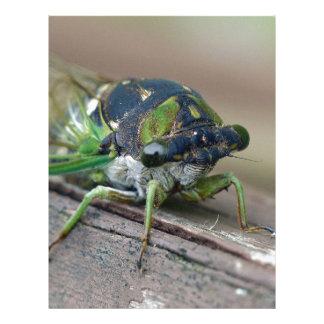 Cicada Letterhead