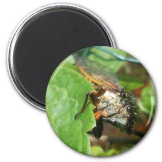 cicada magnet