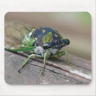Cicada Mouse Pad