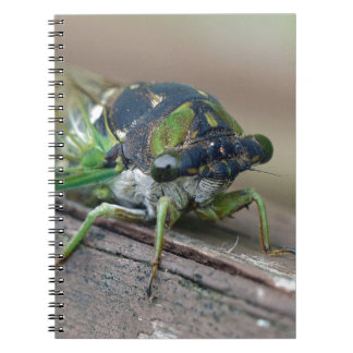 Cicada Notebooks