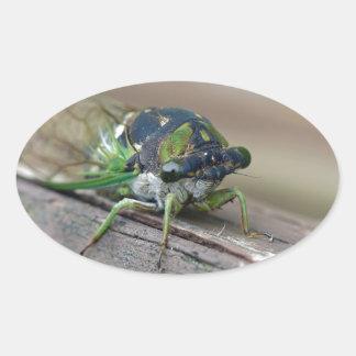 Cicada Oval Sticker