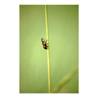 Cicada Photo Print