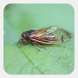 Cicada Square Sticker