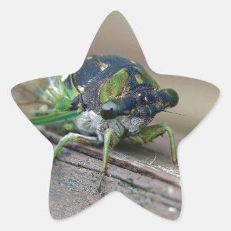 Cicada Star Sticker