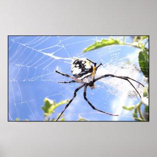 Ciel d araignée posters